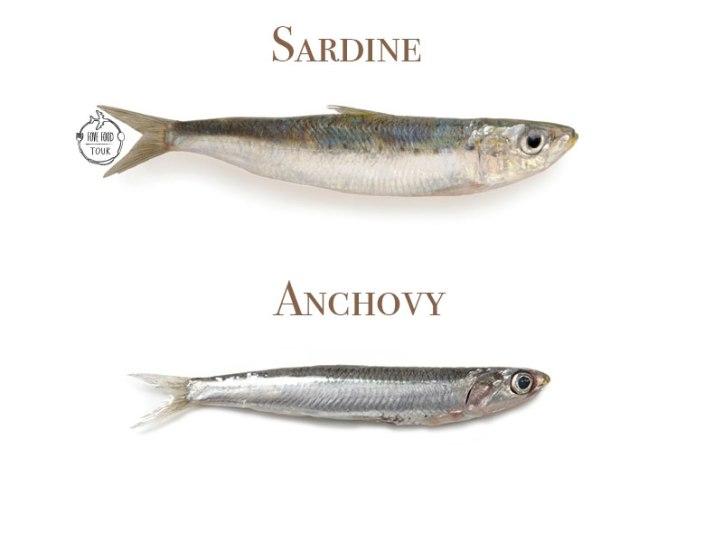 sadine-vs-anchovy